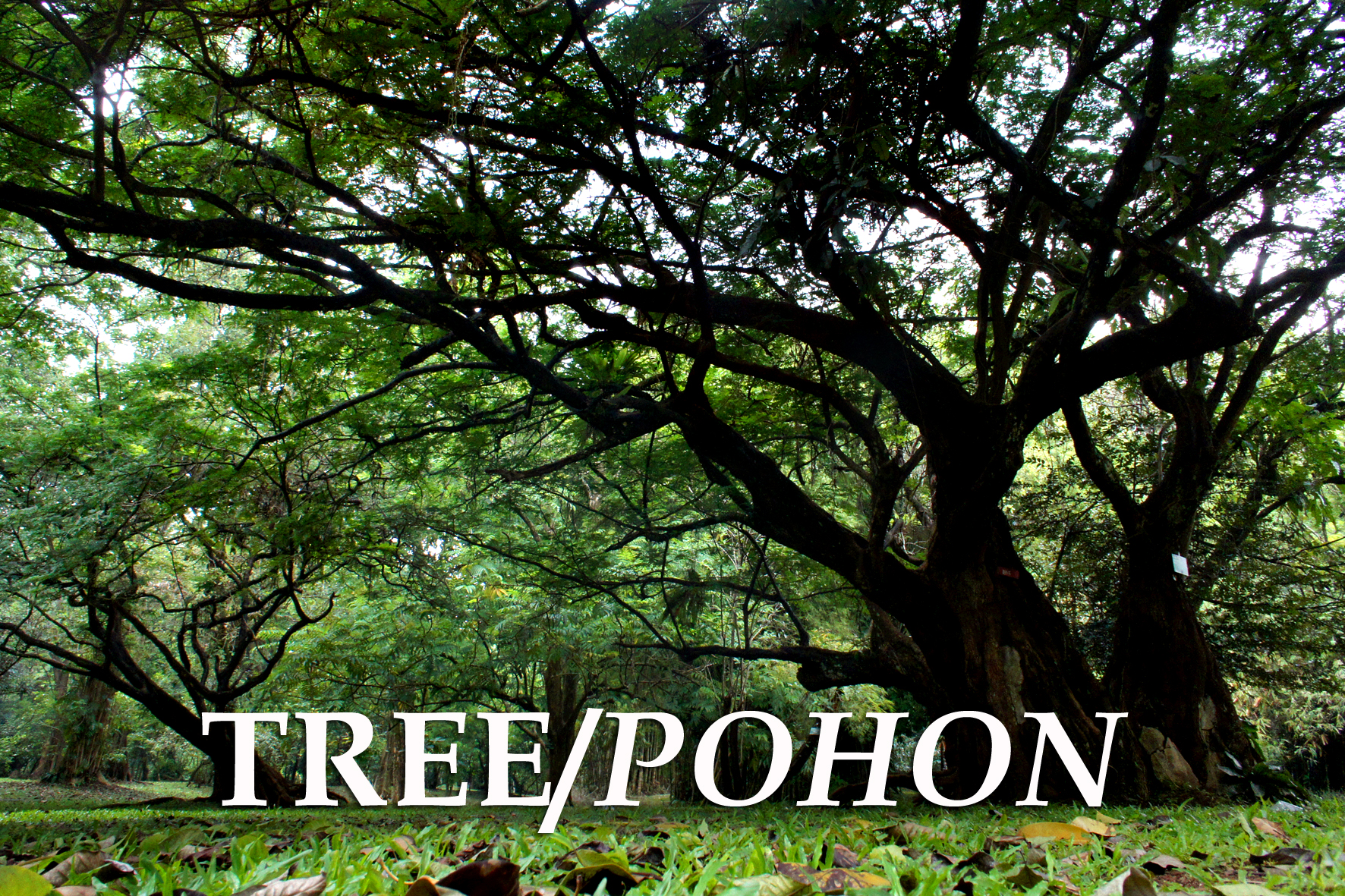TREE / POHON